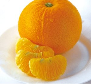 岩城島産 減農薬 はっさく 5kg